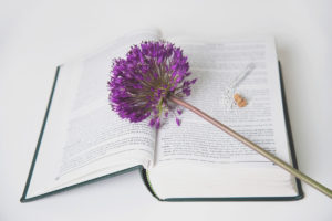 purple flower lies on top of homeopathy book