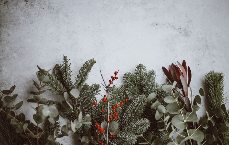 Christmas foliage berries and pines