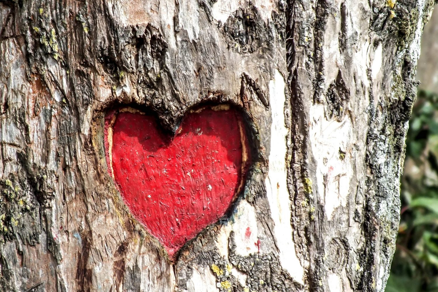 Tree Heart for Valentine's Day